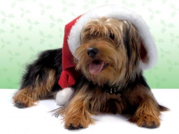 Öffnungszeiten Weihnachtsferien + Wochenend- und Feiertagsnotdienst