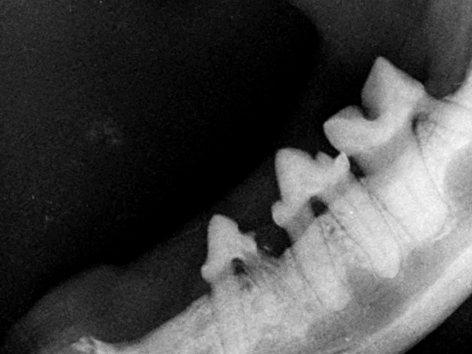 dental_beitrag