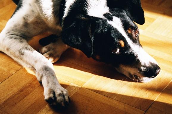 Seminar: Mein Hund hat Angst – was tun?