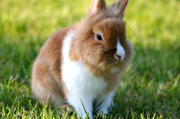 Neue Studie zum Impfschutz bei Kaninchen