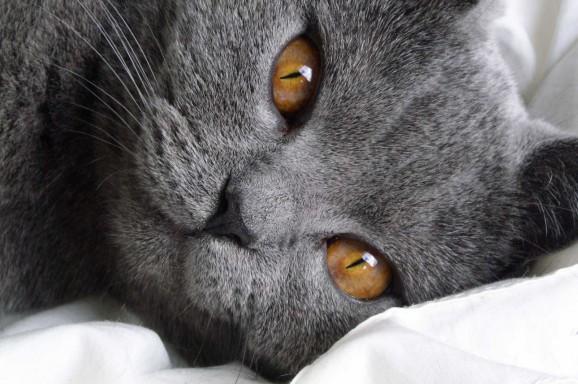 Laboklin – Tag der Katze