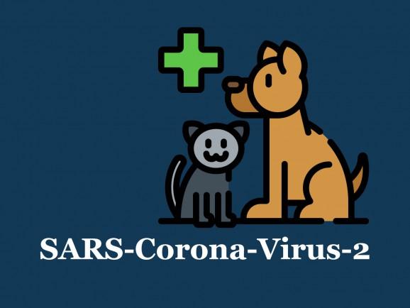 Corona-Virus: Können sich  Hunde und Katzen damit anstecken?