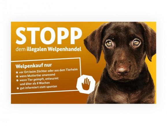 Stopp dem illegalen Welpenhandel