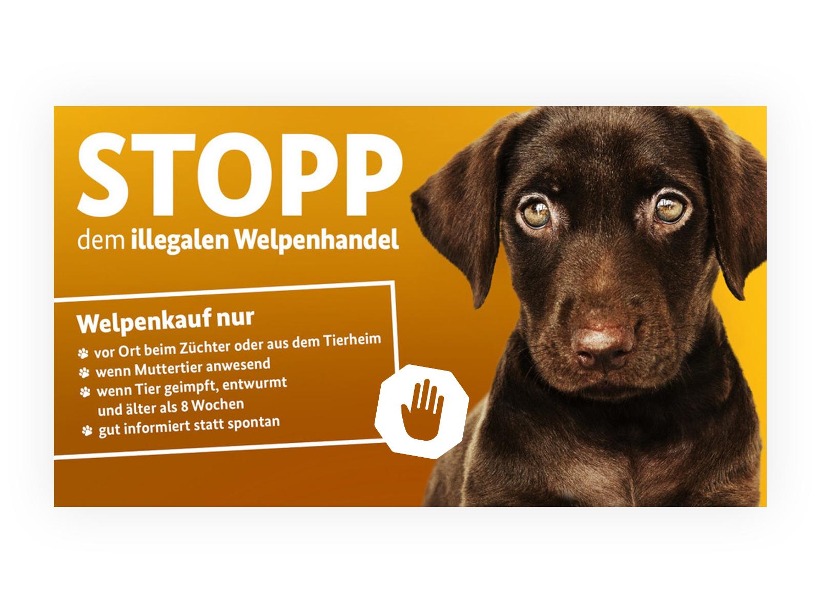 welpe_stopp